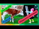 Общаемся с теленком | Nature_My village