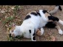 Кошачья суставная гимнастика Articular gymnastics cat