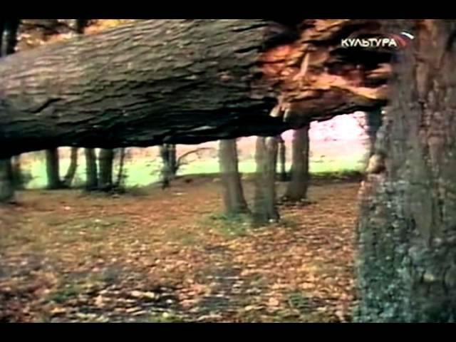 Арктур гончий пёс 1995г