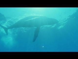 BBC Жизнь млекопитающих 07_Return to the Water