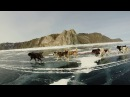 На собачьей упряжке по льду Байкала | Dogsled on the Baikal ice