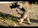 Смешная белка достает кота! Ржач
