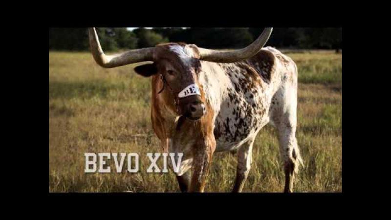 Bevo XV: Coming soon! [Nov. 30, 2015]