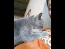 на работе пришла какая то котейка и давай мне массаж делать! ))