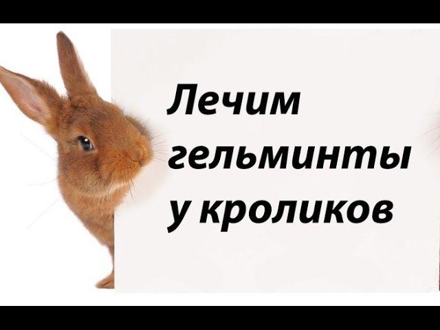 Лечение гельминтов у кроликов. Цистицеркоз и пассалуроз.