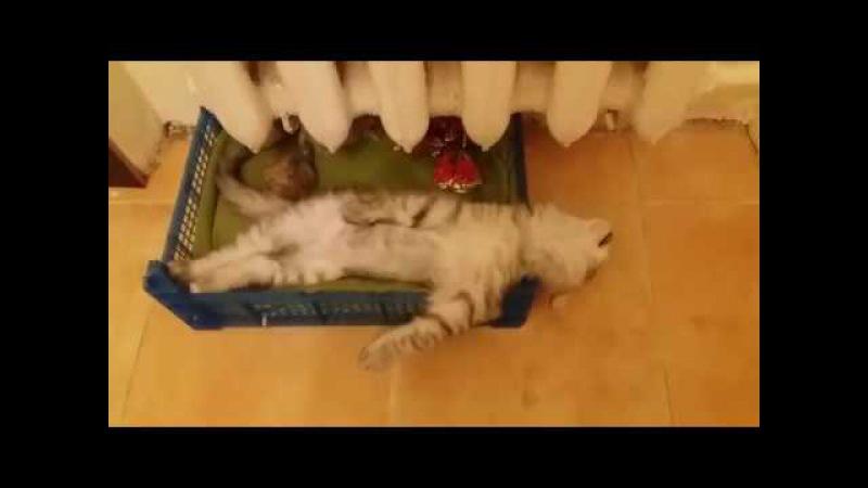 Мой кот храпун! Или как кот проводит вечера!