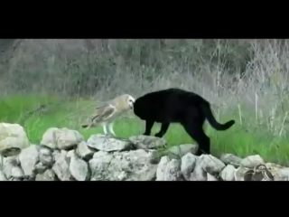 Дружба кошки Фам и совы Гербы из города Таррагона в Испании. Прикол