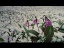 Сибирское Здоровье, сибирь, сибирские травы, витамины. Лучший ролик о Сибири
