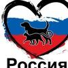 Новомосковск- пикет против живодеров!!!!!!