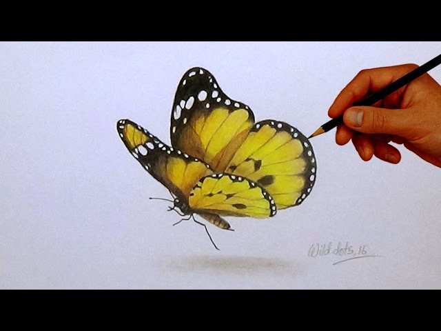 Drawing A Butterfly | Simple And Easy Steps |