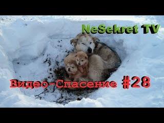 Видео - Спасение 28. Спасаем собак от холодной смерти. Город Улан-Удэ.