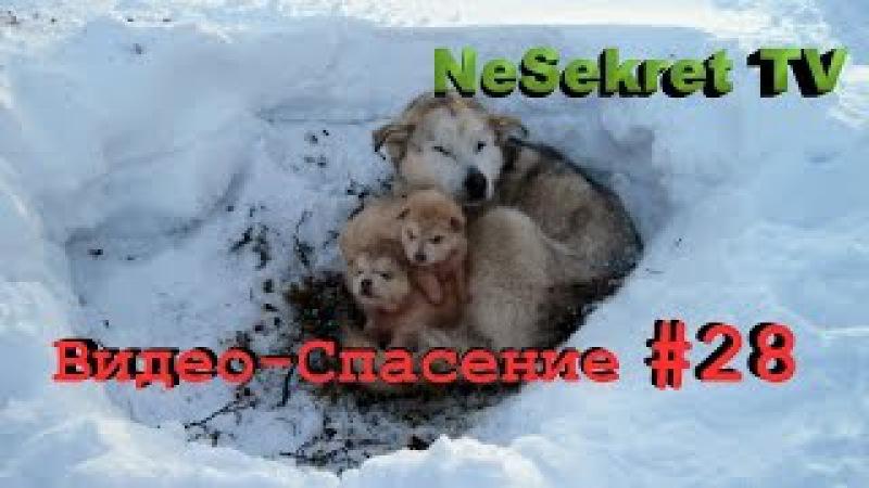 Спасаем собак от голодной смерти. Спасение 28. Город Улан-Удэ.
