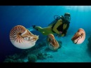 Одиссея Жака Кусто 500 миллионов лет на дне моря 1973