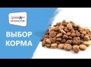 Выбор корма для питомца. Рекомендации ветеринарного врача PETDOCTOR