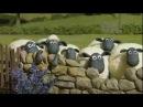 Барашек Шон S1E1 Футбол замечательная игра Shaun the Sheep Off The Baa
