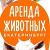 Аренда животных Екатеринбург