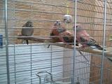 Мои попугаи. Часть 1