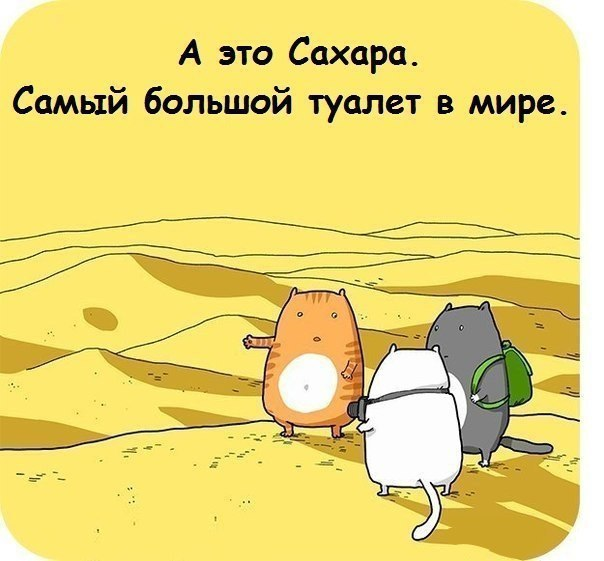 Shig00BCGtk.jpg