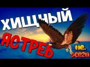 Хищная птица Ястреб-перепелятник ест голубя Орехово-Зуево | Bird of prey eats pigeon