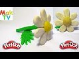 How to make a daisy flower of Play Doh modeling clay Как слепить ромашку из пластилина Плей До