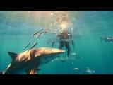 Распаковка Samsung Galaxy S8 в окружении стаи акул