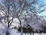 Необычайно и загадочно красивые заснеженные деревья