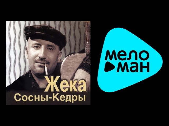 ЖЕКА - СОСНЫ КЕДРЫ / ZHEKA - SOSNY - KEDRY