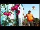LOS PRIMOS DE HUEHUETAN - VIRGEN DE GUADALUPE - VIDEO OFICIAL (SUSCRIBETE)
