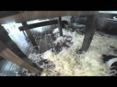 Epic Dog Fail / Dog destroys whole house