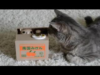 Интерактивная копилка Кот - Воришка