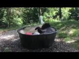 Медведь по имени Такода принимает ванну