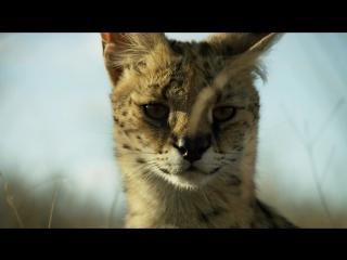 Трейлер найдорожчого відео про живу природу