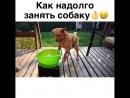 Как на долго занять собаку XtraVine