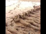 тренировка морских котиков сша