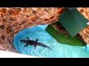 Азовское море ЧАСТЬ 4: КРОКОДИЛОВЫЙ КАНЬОН ЕЙСК кормление крокодилов мясом