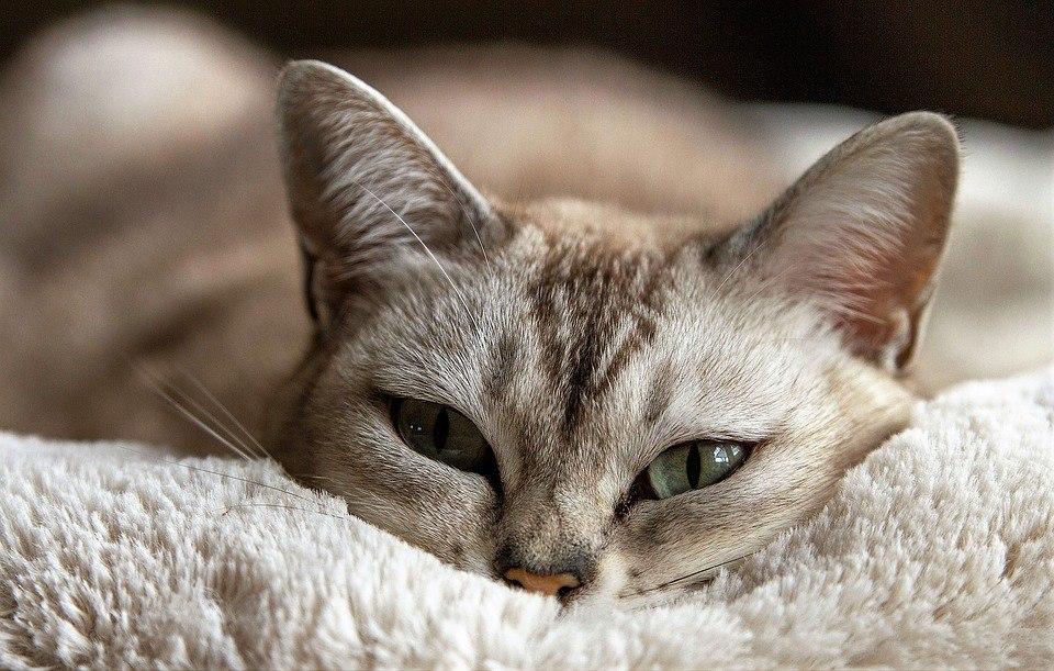 Польза кастрации кота, кастрация кота на дому