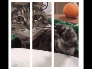 Адские кошки HD