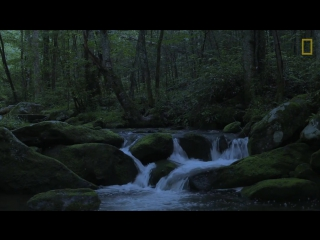 Watch Fireflies Glowing in Sync to Attract Mates