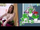 """Мастер-класс от фитодизайнера Юлии Виноградовой для """"Нет проблем!"""""""