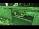 Fallout 4 Прикол 4