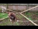 Что делает пес, цирк отдыхает [hd]