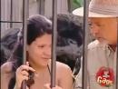 В клетке с гориллой