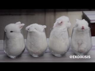 Милота, кролики в стаканах