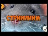 Стремчик twitch.tvnotactic1337