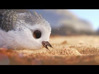 Песочник (Piper, 2016)