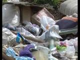 Лес южной части города тонет в мусоре