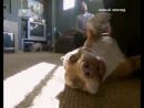 серия 65. dog_whisperer_01_s4 chuy_jack_and_carmine