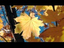 Волшебная мелодия Осени - Панфлейта. Magic melody Pan flute