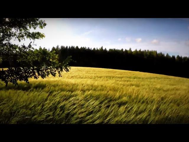 4K Field with Wind, Swallows, Windchimes - Happy Summer moments