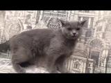 Кошка и какашки))